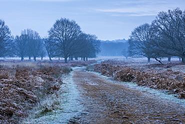 Richmond Park on a frosty morning, Richmond, London, England, United Kingdom, Europe