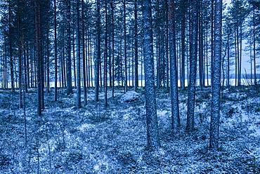 Winter landscape, Akaslompolo, Lapland, Finland, Europe