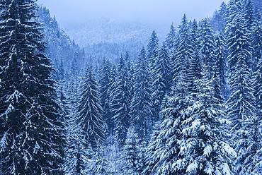 Winter landscapes of Carpathian Mountains near Brasov, Brasov County, Romania, Europe