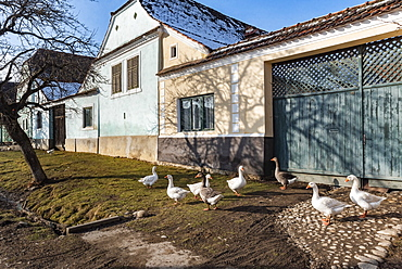 Colourful houses in Viscri, UNESCO World Heritage Site, Transylvania, Romania, Europe