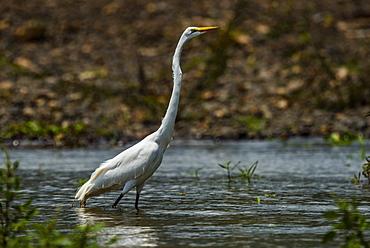 Tarcoles River, Carara National Park, Puntarenas Province, Costa Rica, Central America