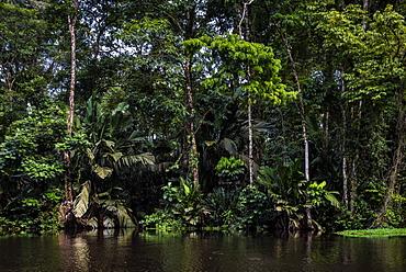 Tortuguero National Park, Limon Province, Costa Rica, Central America