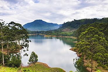 Maussakele Reservoir between Dalhousie and Hatton, Nuwara Eliya District of the Central Highlands, Sri Lanka, Asia