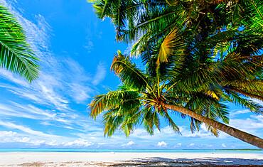 Coconut palms, Scout Park Beach, Cocos Keeling Islands.