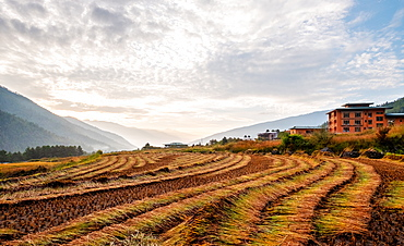 Landscape of freshly harvested fields, Paro, Bhutan, Himalayas, Asia