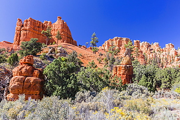 Red sandstone formations in Red Canyon, Dixie National Forest, Utah, United States of America, North America