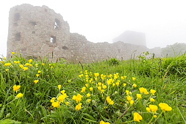 Fog shrouds Hammershus Castle on the most northerly tip of Bornholm, Denmark, Scandinavia, Europe