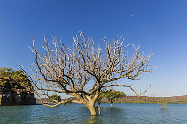 Extreme high tide covers trees in the Hunter River, Kimberley, Western Australia, Australia, Pacific