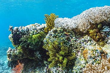 Underwater reef system on pink sand beach, Komodo National Park, Komodo Island, Indonesia, Southeast Asia, Asia