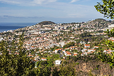 View from above the heart of the capital city of Funchal, Madeira, Portugal, Atlantic, Europe