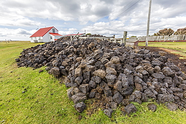 Peat drying in the wind for fuel at Long Island Sheep Farms, outside Stanley, Falkland Islands, U.K. Overseas Protectorate, South America