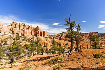 View of hoodoo formations from the Fairyland Trail in Bryce Canyon National Park, Utah, United States of America, North America