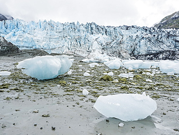 Stranded ice on the low tide in front of Lamplugh Glacier, Glacier Bay National Park and Preserve, Alaska, United States of America, North America