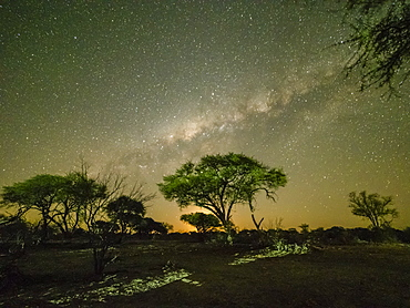 The milky way over acacia trees at night in the Okavango Delta, Botswana, Africa