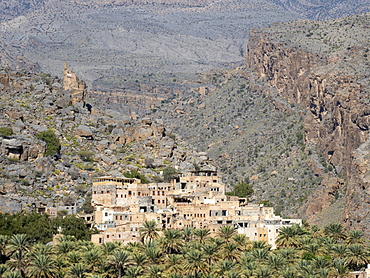 Date palms surround the old village of Al Misfah, Sultanate of Oman, Middle East