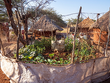 A vegetable garden in the fishing village of Musamba, on the shoreline of Lake Kariba, Zimbabwe, Africa