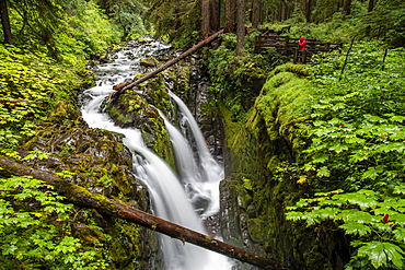 Photographer on the Sol Duc Falls Trail, Sol Duc Valley, Olympic National Park, UNESCO World Heritage Site, Washington State, United States of America, North America
