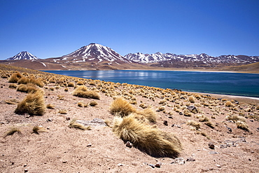 Laguna Miscanti, a brackish lake at an altitude of 4140 meters in the Andean Central Volcanic Zone, Chile, South America