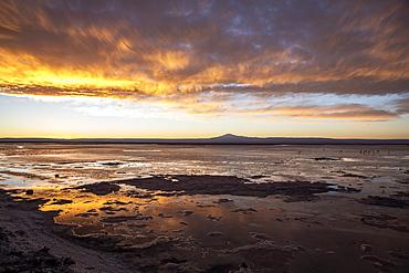 Sunset at Llano de Solaren, Los Flamencos National Reserve, Antofagasta Region, Chile, South America