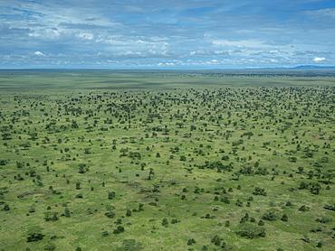 Aerial view of the Serengeti Plains, Serengeti National Park, UNESCO World Heritage Site, Tanzania, East Africa, Africa