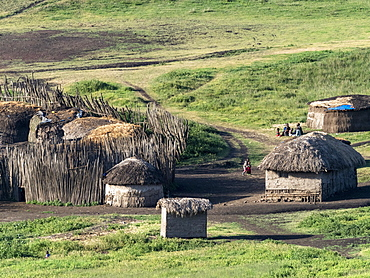 Traditional Maasai village in the Ngorongoro Conservation Area, Tanzania, East Africa, Africa