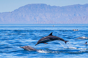 Loreto Bay National Park, Baja California Sur, Mexico. Copyright 2017 Michael S. Nolan All rights worldwide.