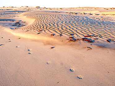 Coyote tracks in the barkan sand dunes on the barrier island of Isla Magdalena, Baja California Sur, Mexico.