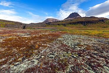 Open tundra and columnar basalt in Brededal, Disko Island, Qeqertarsuaq, Baffin Bay, Greenland, Polar Regions
