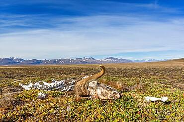 Mackenzie Bugt, Myggbukta, Greenland, Polar Regions