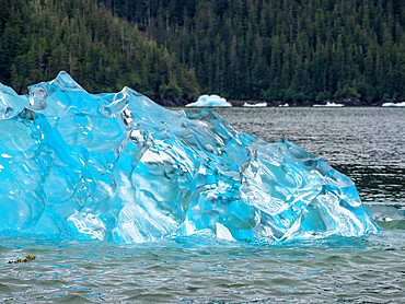 Detail of ice calved from the Leconte Glacier but stranded on a terminal moraine, Petersburg, Southeast Alaska, USA.