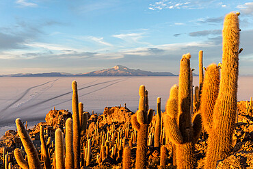 Coqueza or Incaguasi, Salar de Uyuni, Bolivia. Copyright 2017 Michael S. Nolan All rights worldwide.
