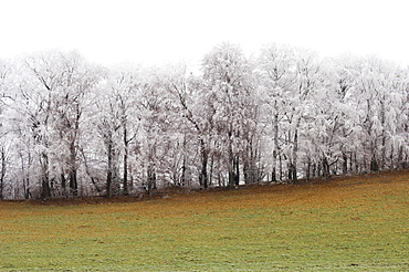 Meadow and snow covered trees, Leoni, Lake Starnberg, Bavaria, Germany
