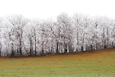 Meadow and snow covered trees, Leoni, Lake Starnberg, Bavaria, Germany