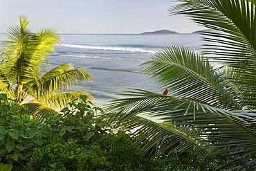 Beach, Anse Patates, La Digue Island, Seychelles
