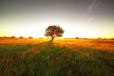 Tree on a meadow in the morning sun casting long shadows, Aubing, Munich, Upper Bavaria, Bavaria, Germany