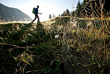 Spider's web on a meadow in front of an male hiker, Oberstdorf, Bavaria, Germany