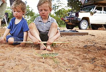 Two boys looking at a chameleon, Khaudum, Namibia