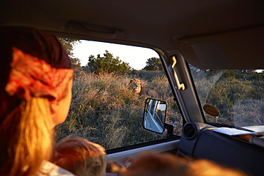 Mother and son insinde a car looking at a lion, Kalahari, Botswana