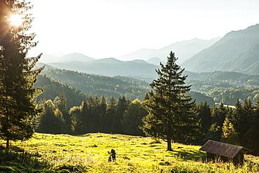 Mountainbiker in the woods, Hammersbach, Garmisch-Partenkirchen, Bavaria, Germany