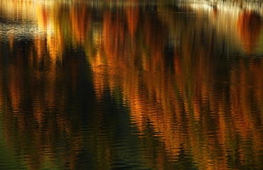 Golden autumn with lark forest reflecting in a lake, Schnalstal, South Tyrol, Italy