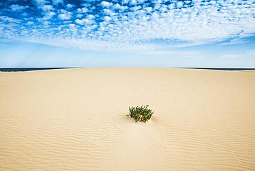 Dunes of Corralejo, Corralejo, Fuerteventura, Canary Islands, Spain