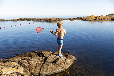 boy with fishing net on rocks near the beach at Hullehavn Camping, Summer, Baltic sea, MR, Bornholm, Svaneke, Denmark, Europe