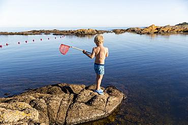 boy with fishing net on rocks near the beach at Hullehavn Camping, Summer, Baltic sea, MR, Bornholm, Svaneke, Denmark, Europe