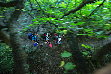 Three young male camper walking through a forest, Freilassing, Bavaria, Germany
