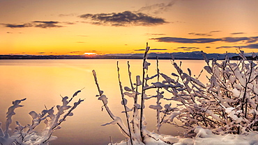 Winter morning with snow-covered plants at sunrise on Lake Starnberg, Tutzing, Bavaria, Germany