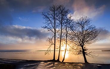 Trees at sunrise on the shore of Lake Starnberg, Tutzing, Bavaria, Germany