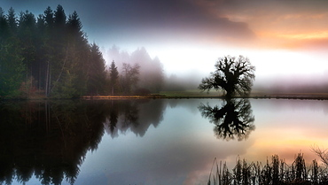Foggy autumn mood at the Fischweiher near Bernried, Bavaria, Germany