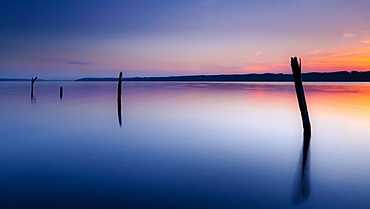 Deadwood at sunrise in Lake Starnberg, Bavaria, Germany