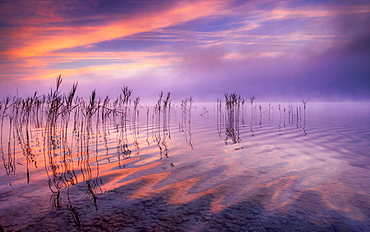 Reflecting clouds and reeds at sunrise on Lake Starnberg, Bavaria, Germany