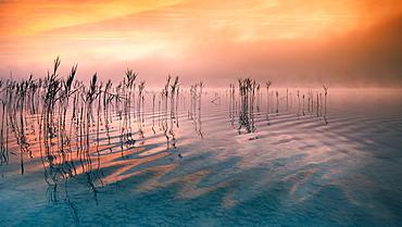Reflecting clouds and reeds at sunrise on Lake Starnberg, Bavaria, Germany
